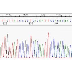 NanoPOP polymers