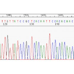 DNA sequencing buffers